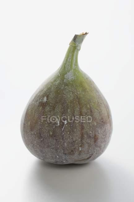Fresh whole fig — Stock Photo