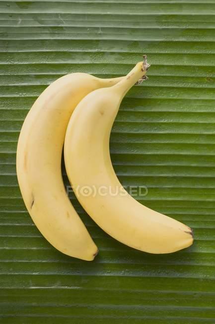 Бананы на зеленый лист — стоковое фото
