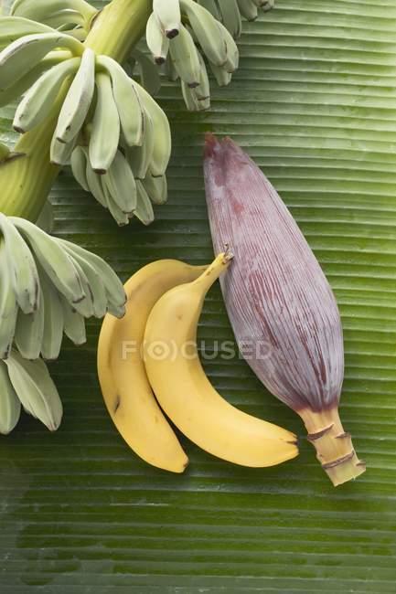 Пучки с бананами и цветок банана — стоковое фото