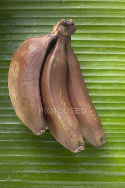 Bunch of red bananas — Stock Photo