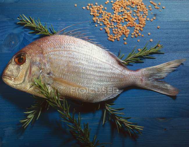 Raw sea bream with rosemary — Stock Photo