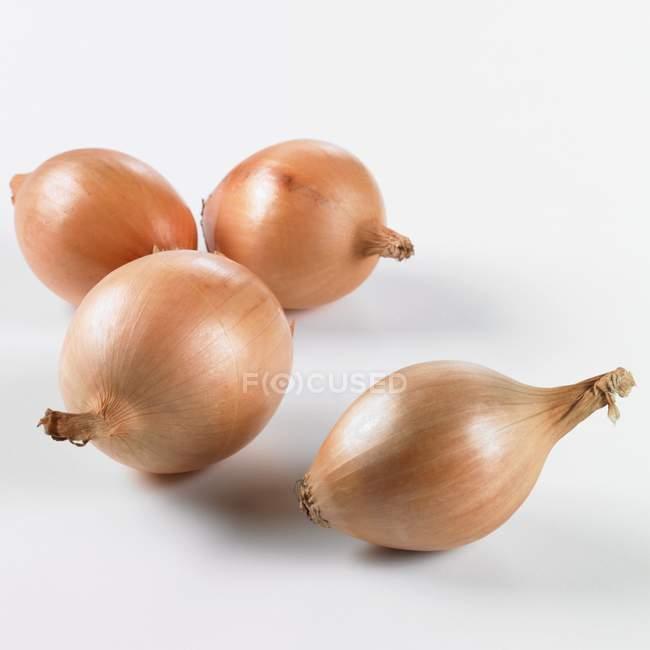 4 cebolas, close-up — Fotografia de Stock