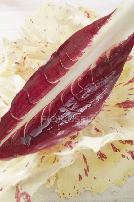 Tipos de hojas de radicchio - foto de stock