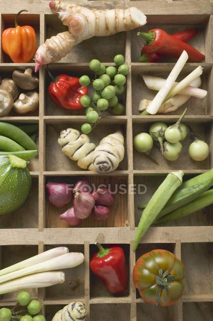 Various types of vegetables, spices and mushrooms in type case — Stock Photo