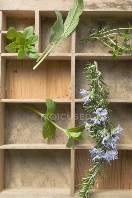 Vista superior de varias hierbas frescas en caso de tipo - foto de stock