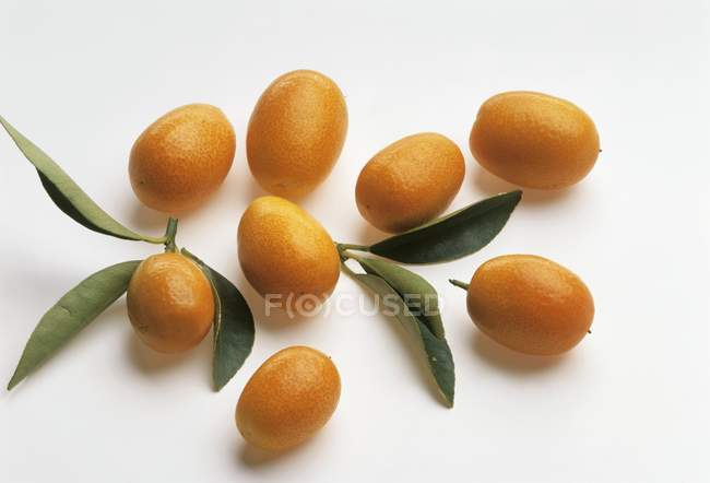 Fresh ripe kumquats with leaves — Stock Photo