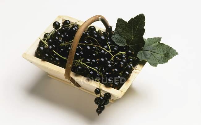 Fresh ripe blackcurrants — Stock Photo