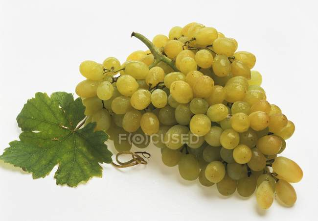 Green grapes with leaf — Stock Photo