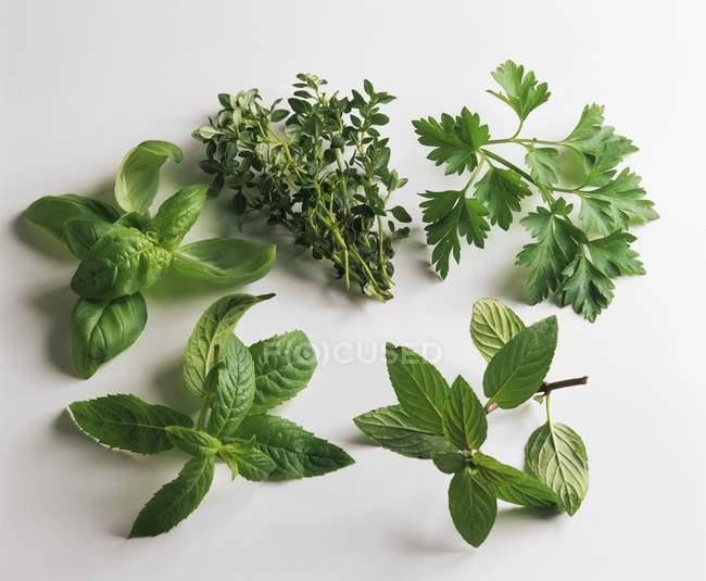 Diverses herbes culinaires — Photo de stock