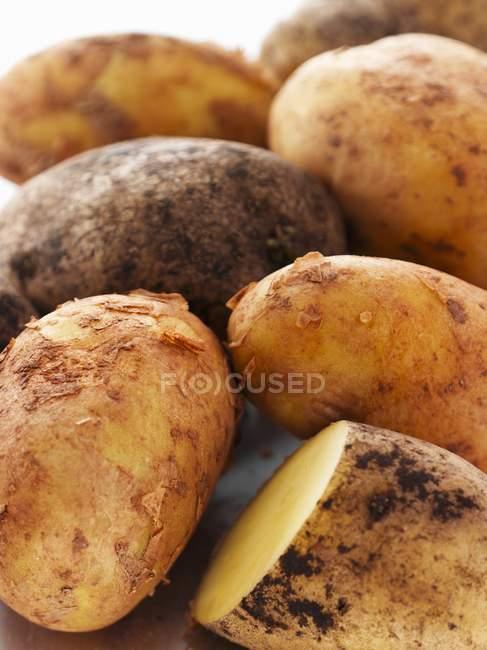 Frisch gepflückte Kartoffeln — Stockfoto