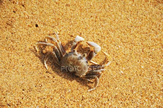 Повышенной дневной вид морской краб в песке — стоковое фото