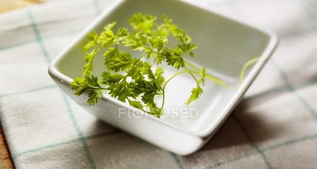 Fresh Chervil sprig — Stock Photo
