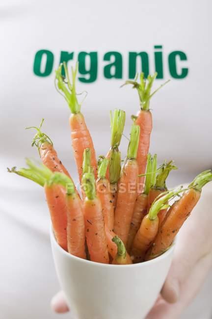 Woman holding organic fresh carrots — Stock Photo