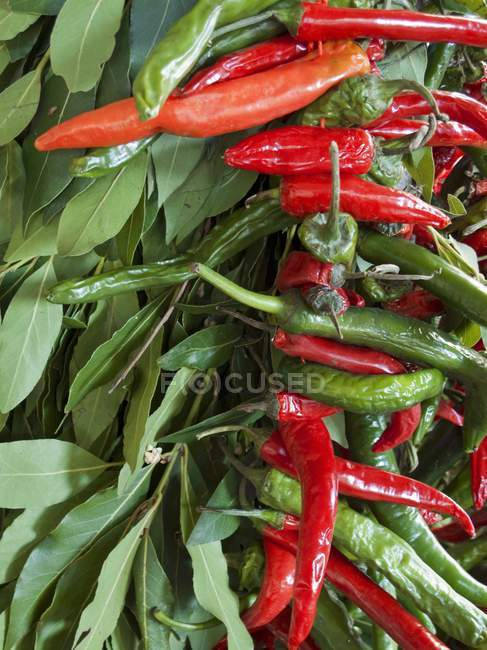 Fresh bay leaves and chillies — Stock Photo