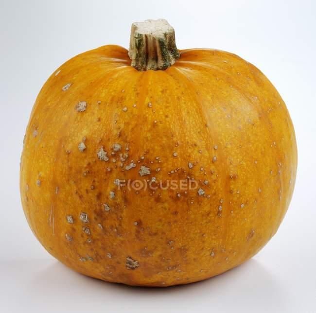 Fresh ripe pumpkin — Stock Photo