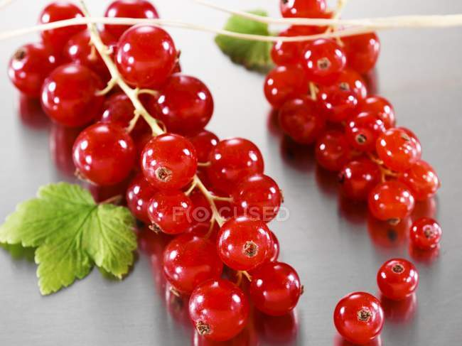 Fresh bunches of redcurrants — Stock Photo