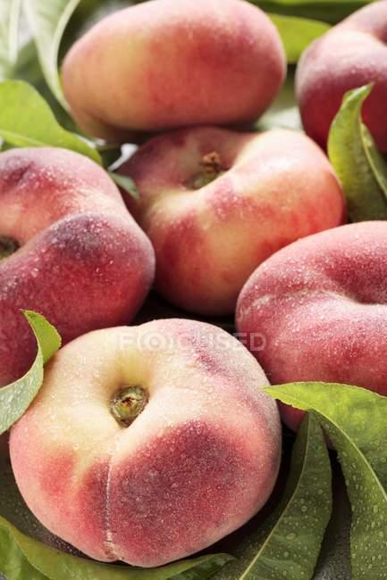 Several vineyard peaches — Stock Photo