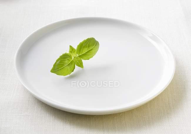 Foglie di basilico sul piatto — Foto stock