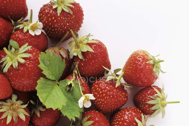 Fresh Strawberries with Blossoms — Stock Photo