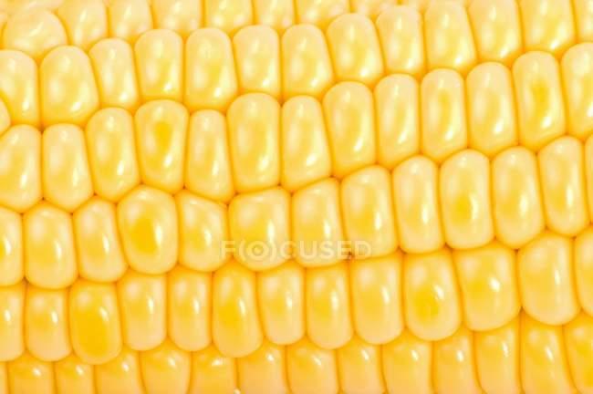 Ripe organic corncob — Stock Photo