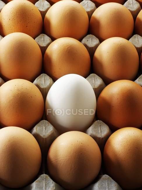 Яйца в строке — стоковое фото