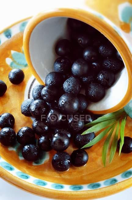 Baies d'açai dans bol renversé — Photo de stock