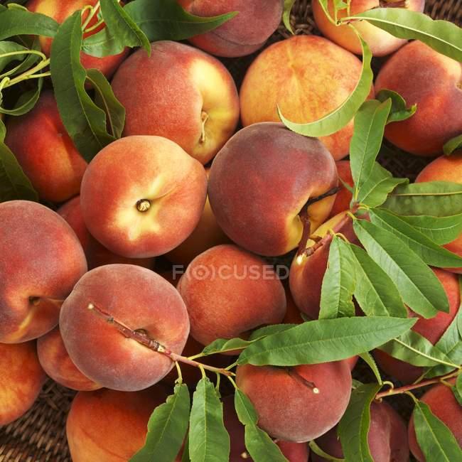 Pesche mature organiche — Foto stock