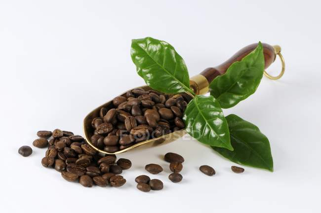 Granos de café en cuchara de metal - foto de stock