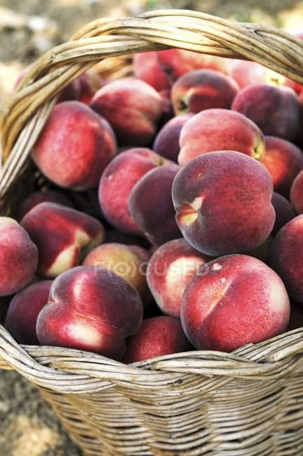 Корзина из спелых персиков — стоковое фото