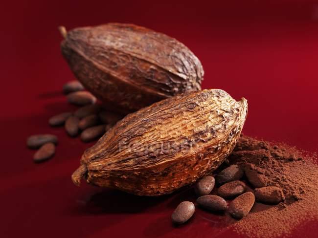 Granos de cacao y polvo - foto de stock