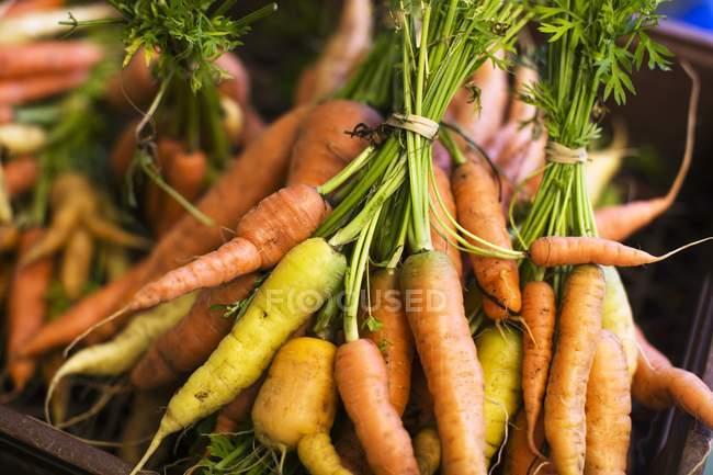 Manojos de zanahorias frescas - foto de stock