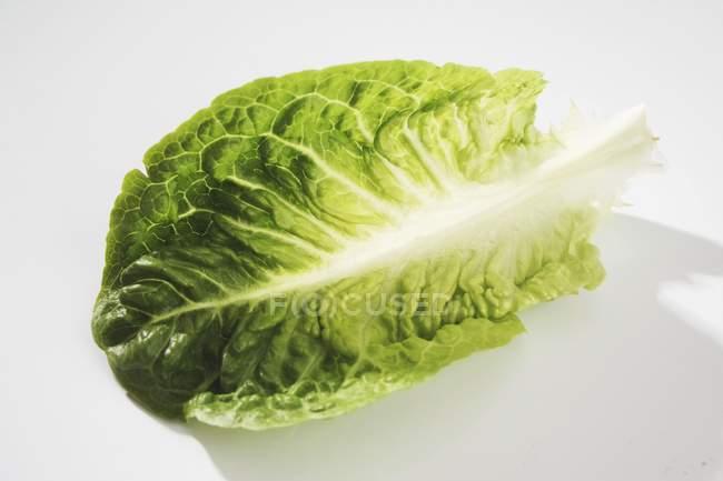 Аркуш свіжий салат — стокове фото