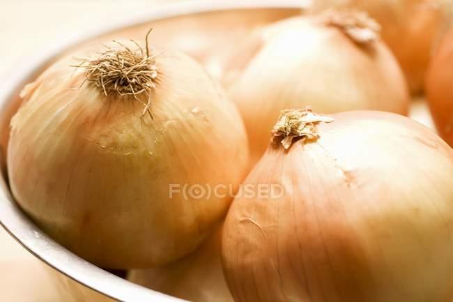 Tigela de cebola espanhola — Fotografia de Stock