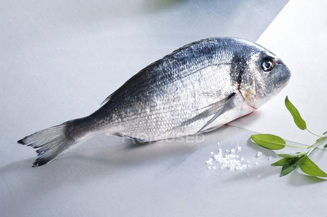 Fresh sea bream with salt and sage — Stock Photo