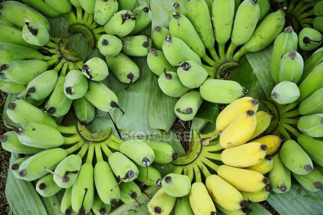 Зелені і жовті банани — стокове фото