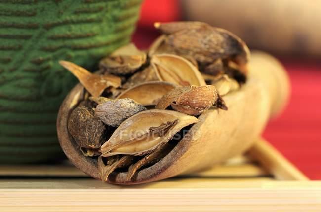 Frutti secchi di forsythia — Foto stock
