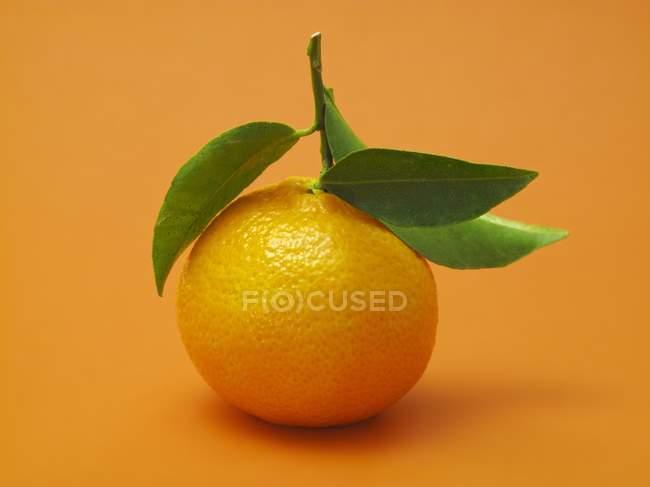 Orange mandarine avec feuilles — Photo de stock