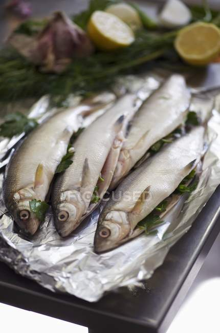 Fresh fish with herb stuffing — Stock Photo