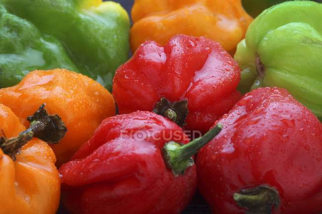 Colourful Scotch Bonnet chilli peppers — Stock Photo