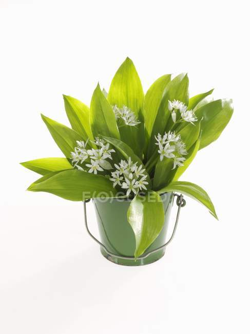 Closeup view of a bunch of ramsons in a bucket — Stock Photo
