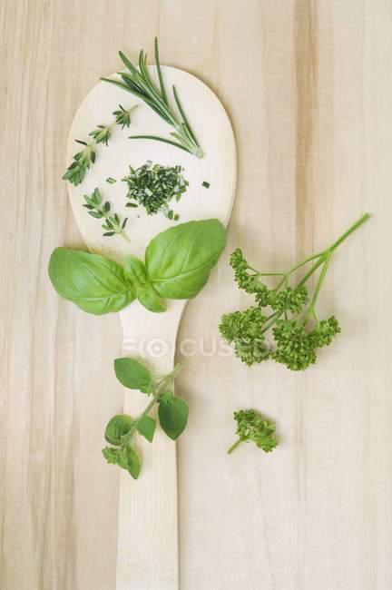 Origan et persil sur cuillère — Photo de stock