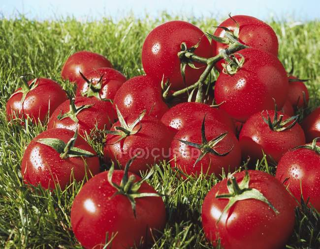 Wet vine tomatoes — Stock Photo