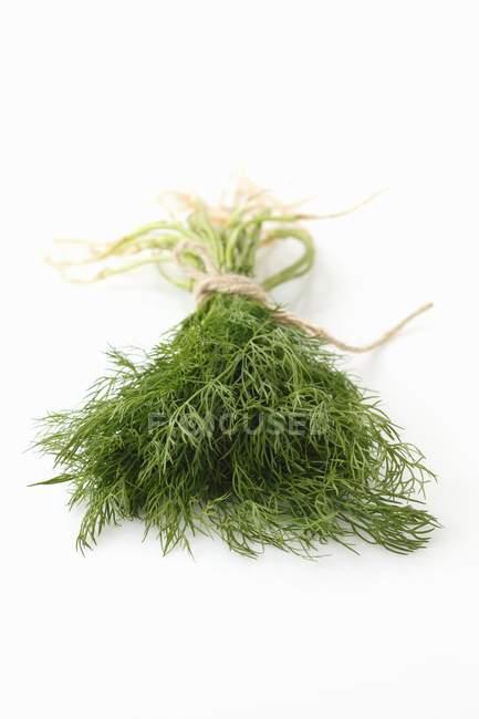 Bouquet d'aneth frais — Photo de stock