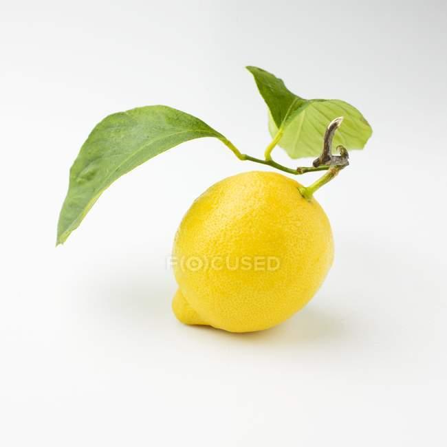 Zitrone mit Stiel und Blättern — Stockfoto