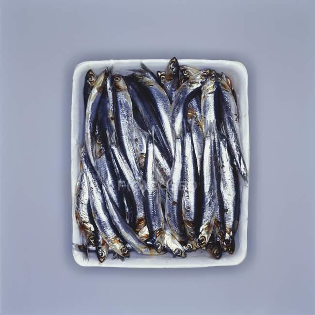 Свежие сардины в блюдо — стоковое фото