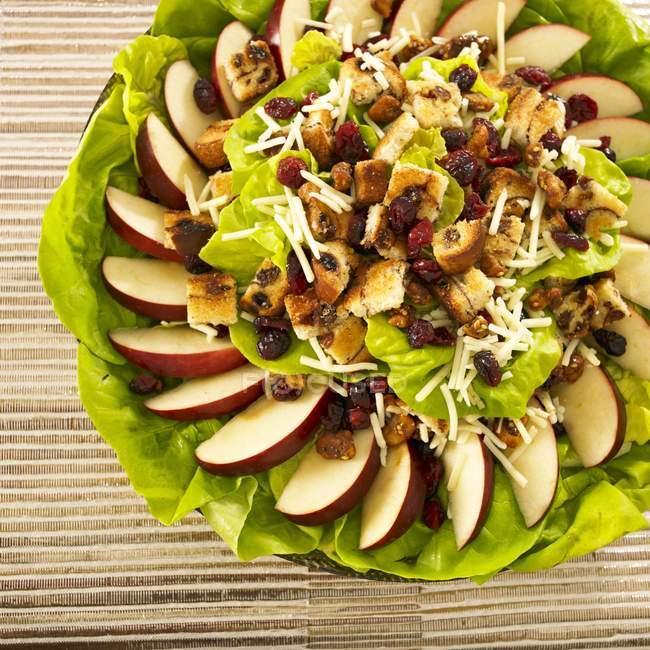 Salada de alface Bib — Fotografia de Stock
