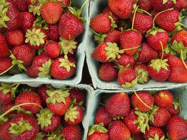 Baskets of Fresh Strawberries — Stock Photo