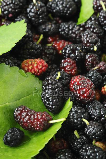 Fresh Mulberries in heap — Stock Photo