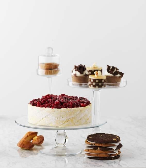 Torta de chocolate e biscoitos — Fotografia de Stock