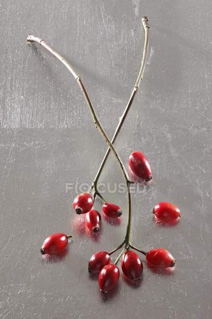 Vue rapprochée des hanches de rose avec des brindilles sur la surface grise — Photo de stock